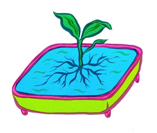 planttray