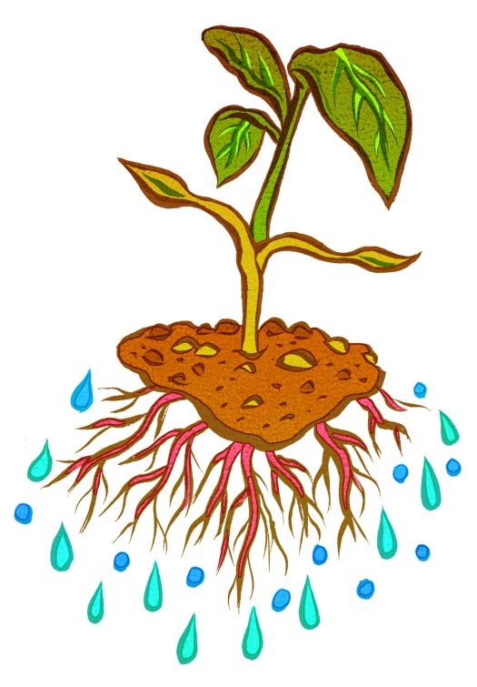 plantwater